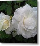 White Rose And Raindrops Metal Print
