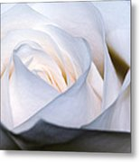 White Rose Metal Print
