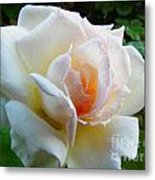 White Rose Oleo Metal Print
