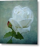 White Rose On Blue Metal Print