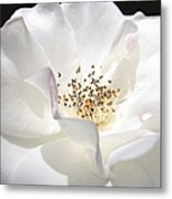 White Rose Petals Metal Print by Jennie Marie Schell
