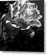 White Rose Metal Print by Robert Bales