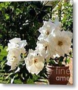 White Roses H A Metal Print