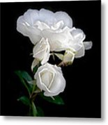 White Roses In The Moonlight Metal Print
