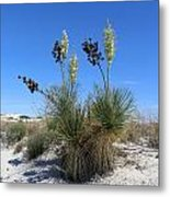White Sands Dune With Soap Yucca Metal Print