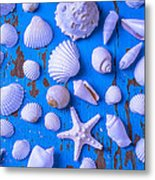 White Sea Shells On Blue Board Metal Print