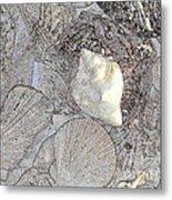 White Shell Metal Print