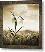 White Snakes Head Fritillary In Morning Dew Metal Print