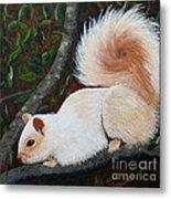 White Squirrel Of Sooke Metal Print