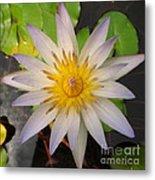 White Star Lotus Metal Print