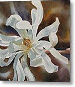 White Star Magnolia Blossom Metal Print