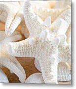 White Starfish 2 Metal Print