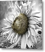 White Sunflower Metal Print