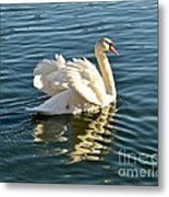 White Swan At Sunset Metal Print