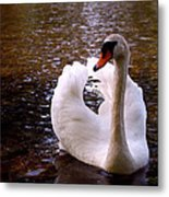 White Swan Metal Print by Rona Black