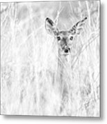 White-tail Doe High Key Metal Print