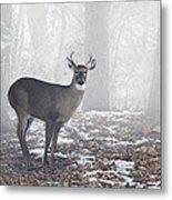 White Tailed Deer Buck In The Mist Metal Print