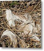 White-tailed Deer Hair Metal Print