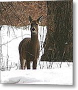 White-tailed Winter Stand  Metal Print