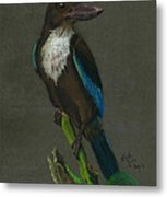 White-throated Kingfisher Metal Print