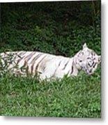 White Tiger 2 Metal Print