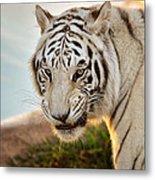 White Tiger At Sunrise Metal Print