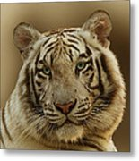 White Tiger II Metal Print