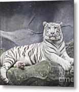 White Tiger On A Rock  Metal Print