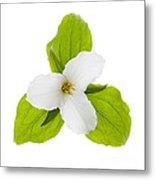 White Trillium Flower  Metal Print by Elena Elisseeva