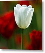 White Tulip - Featured 3 Metal Print