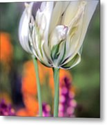White Tulip Splash Of Color Metal Print