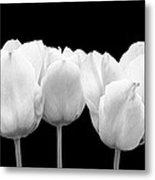 White Tulip Triple On Black Metal Print