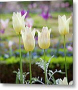 White Tulips In Parisian Garden Metal Print