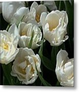 White Tulips In The Garden Metal Print