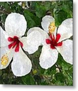 White Twin Hibiscus With Red Veriegation Metal Print