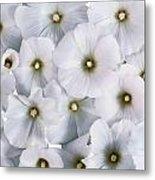 White Violets Metal Print