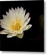 White Water Lily 2 Metal Print