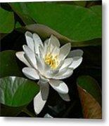 White Waterlily Lotus Metal Print