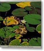 white waterlily - Nymphaea odorata - 09SE04 Metal Print