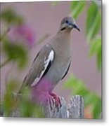 White Wing Dove Metal Print