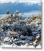 White Winter In The Desert Of Tucson Arizona Metal Print