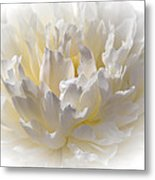 White Peony With A Dash Of Yellow Metal Print
