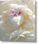 White With Red Peony Metal Print