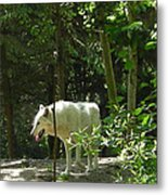 White Wolf In Forest Metal Print