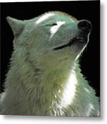 White Wolf In The Shade Metal Print