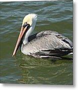 Whiteheaded Pelican Metal Print