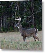 Whitetail Buck 1 Metal Print