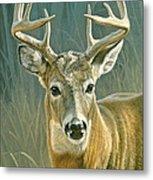 Whitetail Buck Metal Print by Paul Krapf