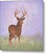 Whitetail Metal Print by David Stribbling