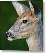 Whitetail Deer Metal Print